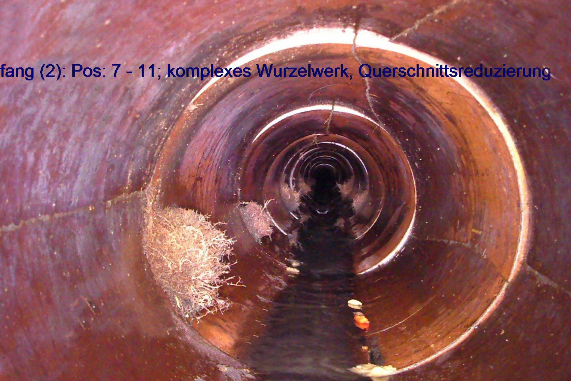 Wurzeleinwuchs C Azv Erdinger Moos 3