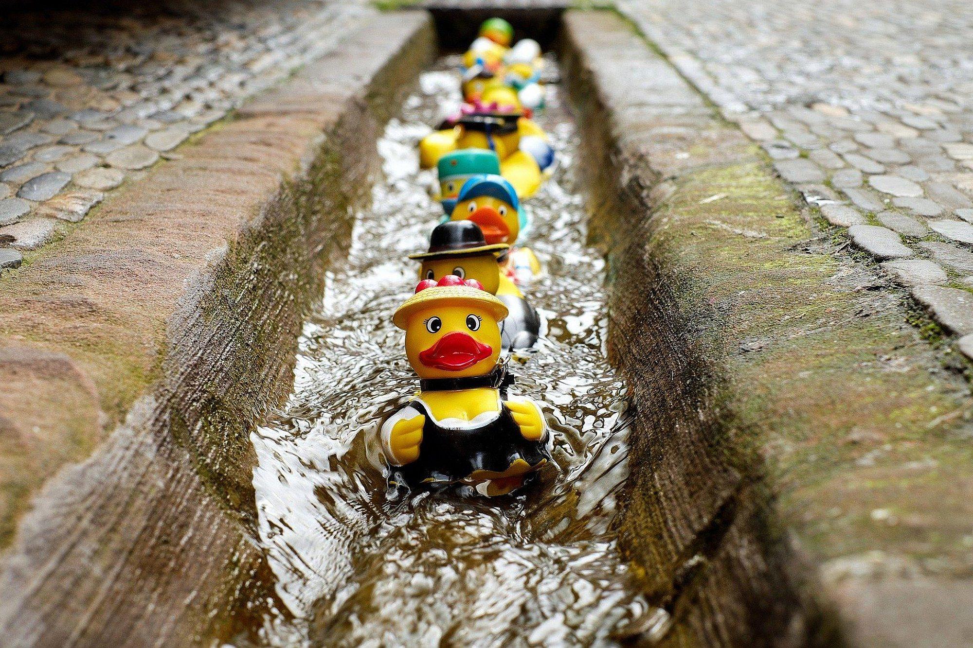 Eine Reihe an farbenfrohen Gummienten schwimmt in einer Regenrinne auf die Kamera zu.